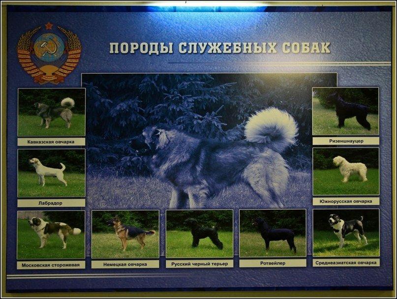 ВЧ32516. Породы служебных собак
