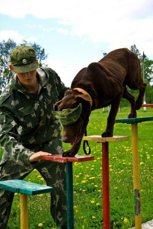 ВЧ32516. Тренировка с питомцем